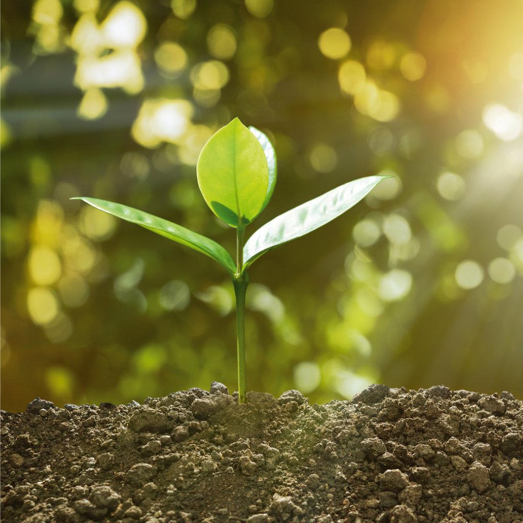 umweltrecht kleine pflanze